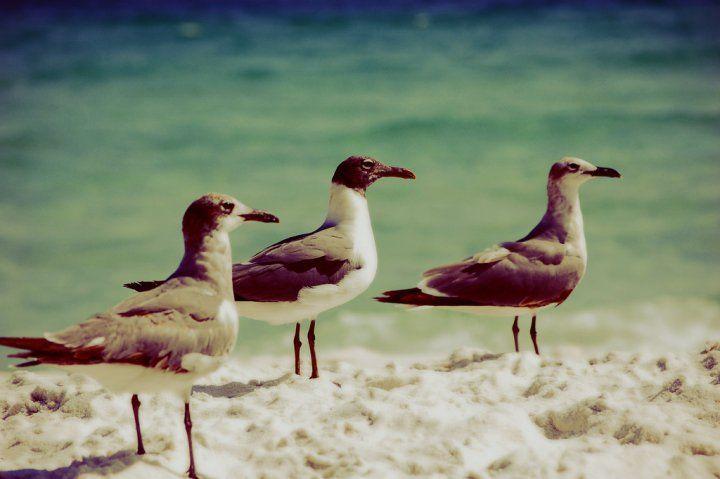 Beach Birds.