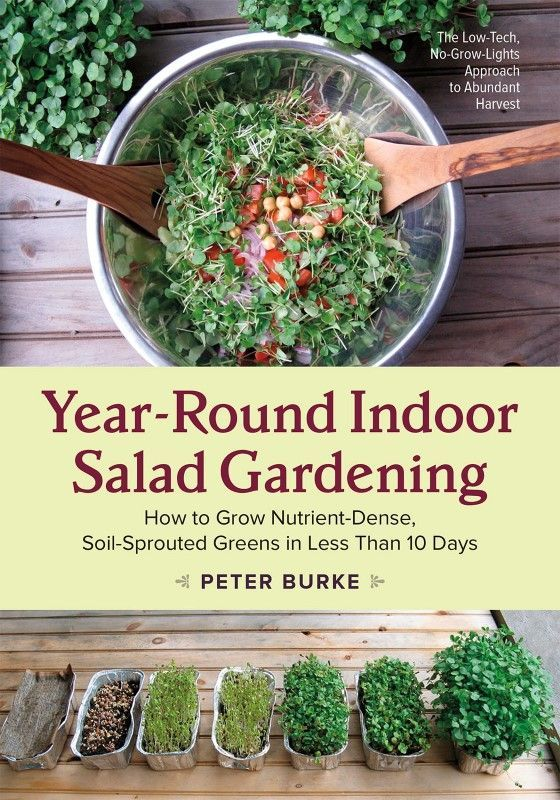 Year Round Salad Gardening: How To Build An Indoor Garden Shelf