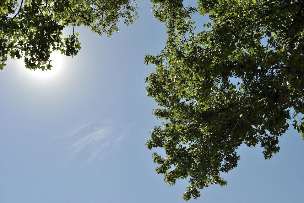 September sky at #starkbros #gardencenter