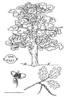 Tree Colouring Pages Tree Coloring Page Coloring Pages Leaf