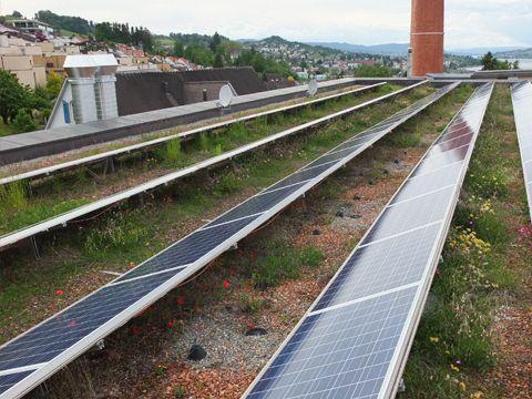 Sedum och solceller | Takhage | Sustainability, Green building och Sustainable living