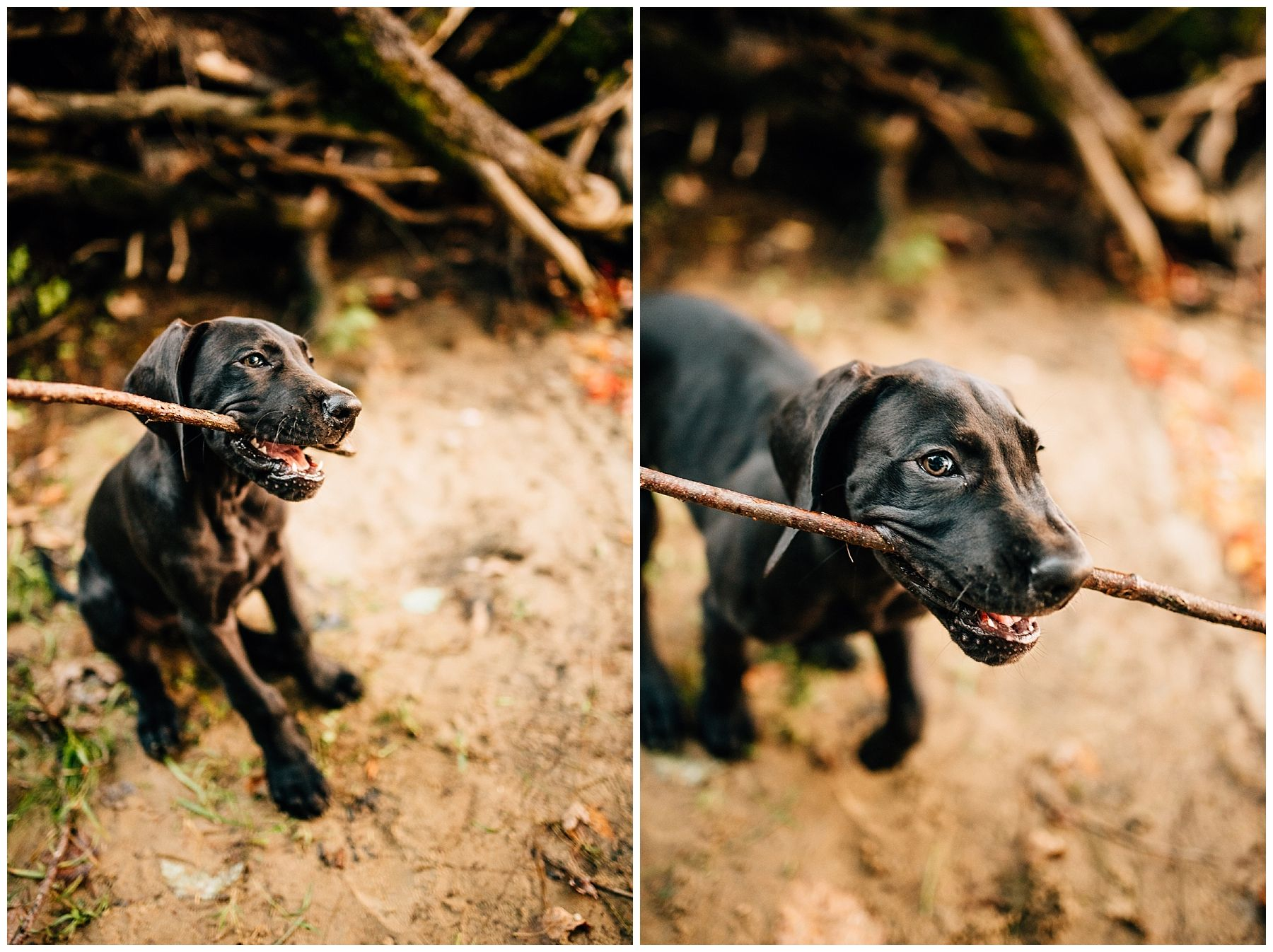 Adelene Murphy And Henry Saco Maine Dogs Dane Puppies