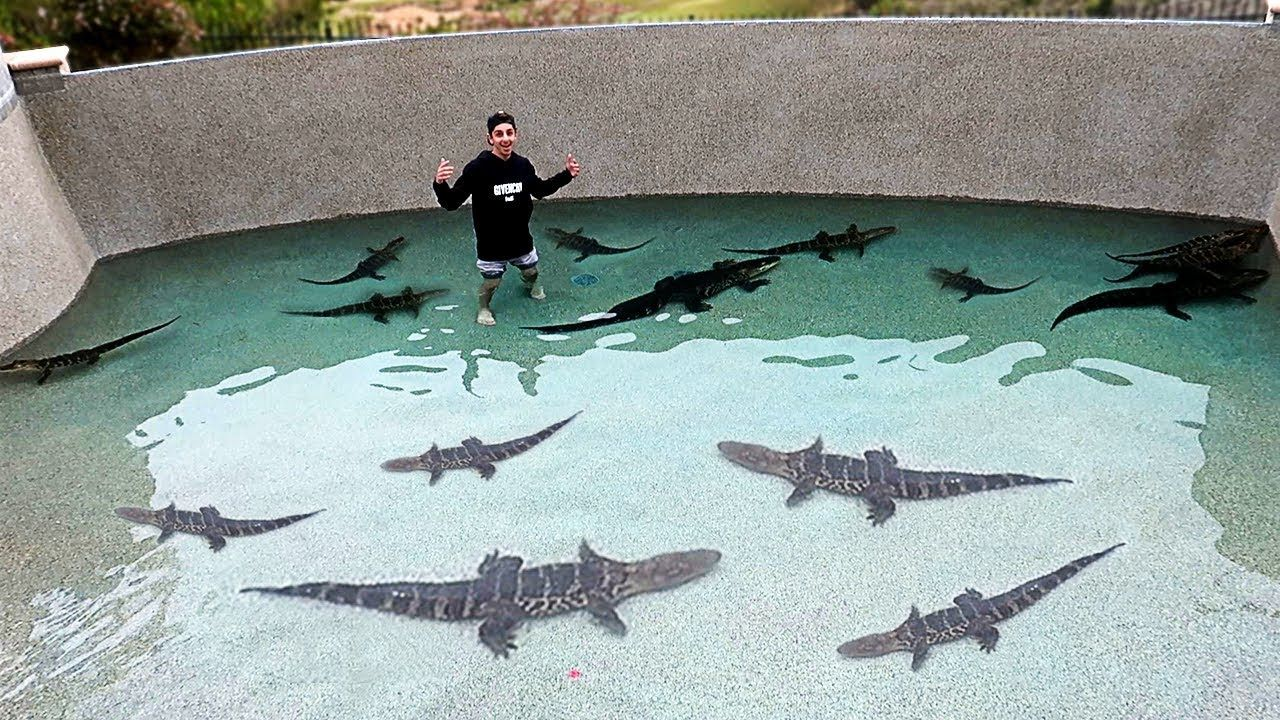 A New Video From Faze Rug Called I Filled My Pool With Deadly Alligators Swimming With Them Alligator Swimming Caiman