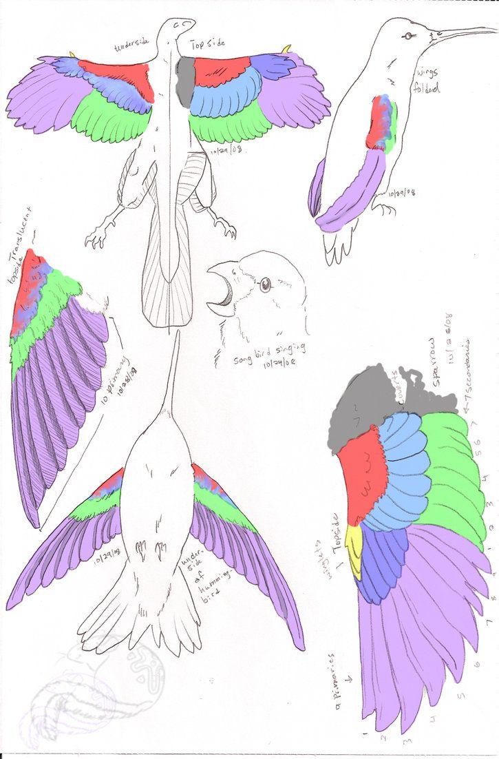 bird wings anatomy - 725×1102