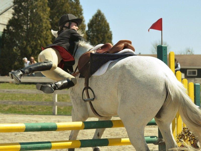 Les Fonds D Ecran Un Cheval Blanc Qui Refuse Un Obstacle Chevaux De Spectacle Chevaux D Obstacles Saut D Obstacles