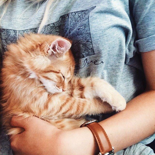 Pin Von Charlie Auf I Would Die For You Katzen Katzenbabys Baby Katzen