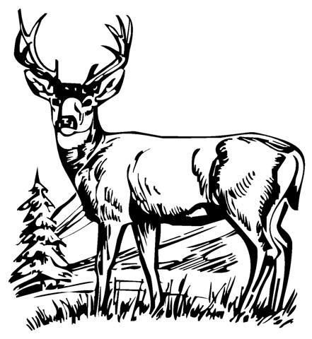 Pin By P F On Work Farm Animal Coloring Pages Deer Sketch Animal Coloring Pages