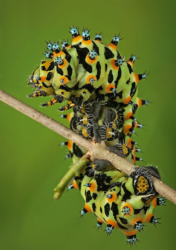 Caterpillars On Photos Are Much Easier To Appreciate Than