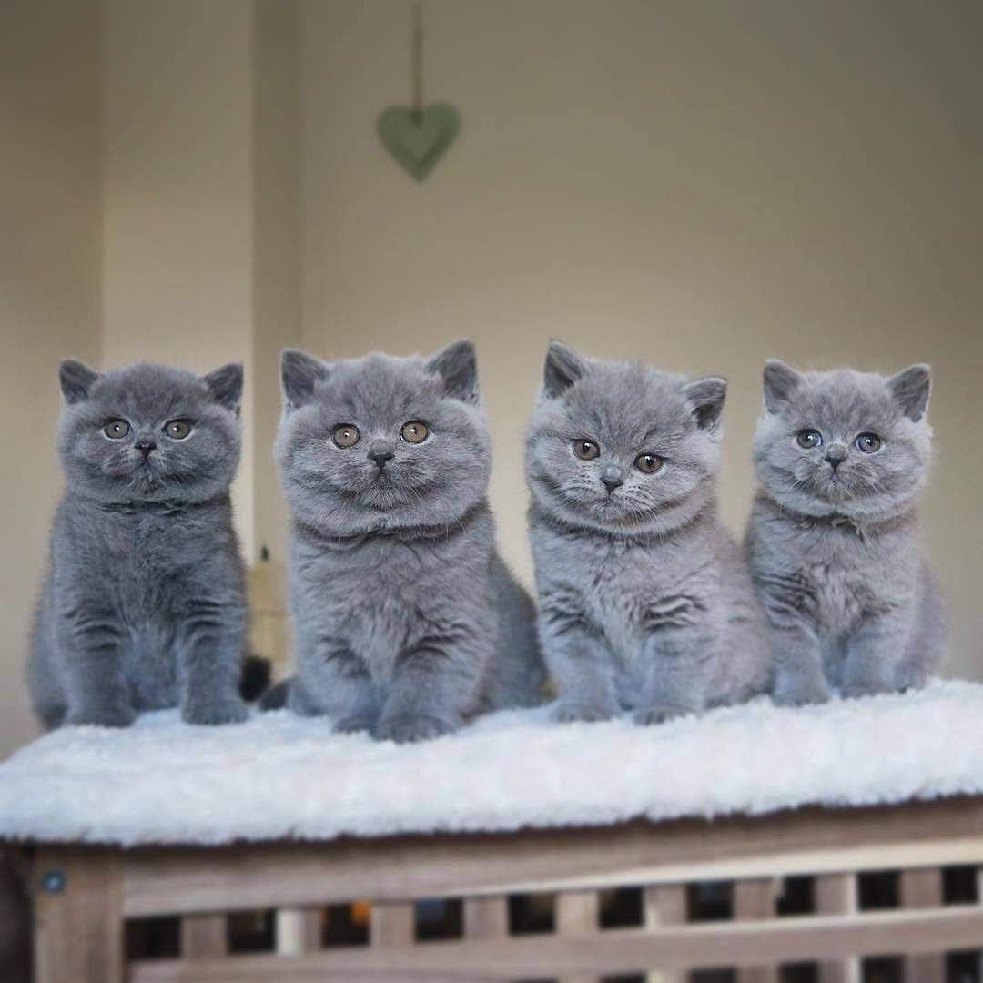 Pin by Jerry Browne on Economists Kittens cutest