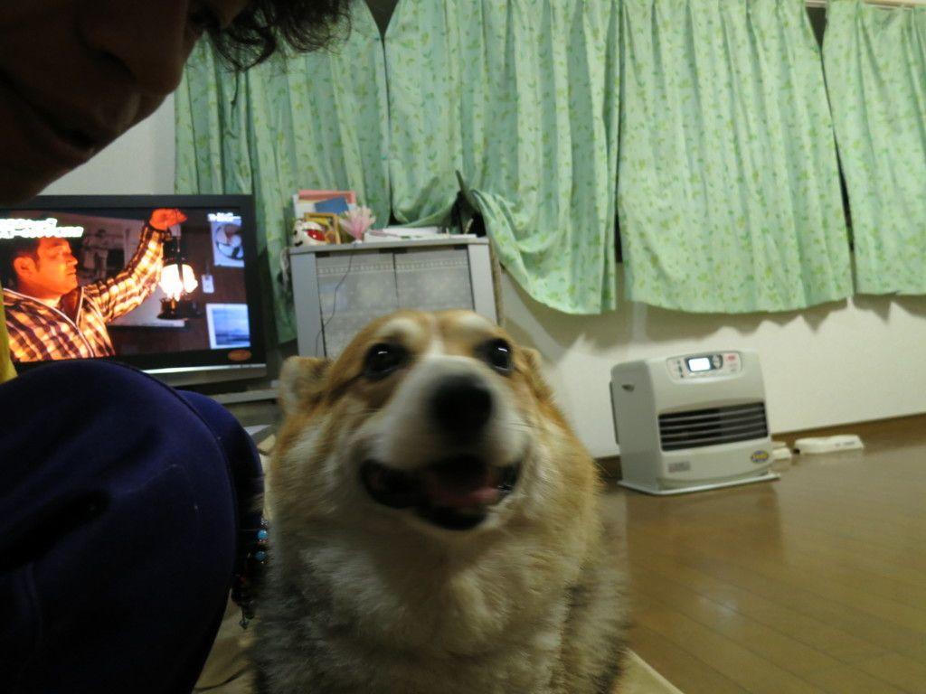 犬が雷の音を怖がるのは雷恐怖症 花火など大きな音が苦手な原因や注意点は 犬 雷 花火