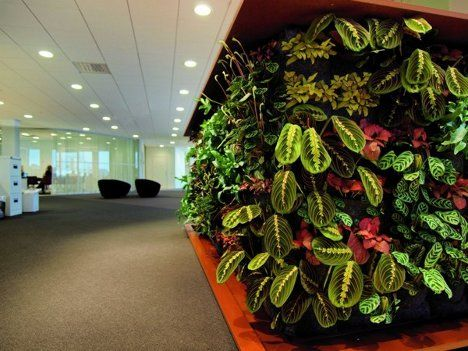 rich textures, colours and shapes are only some of the things that green walls can bring to your interior