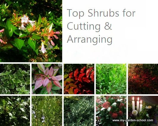 Top 10 Shrubs For Flower Arranging In Winter From Top Left