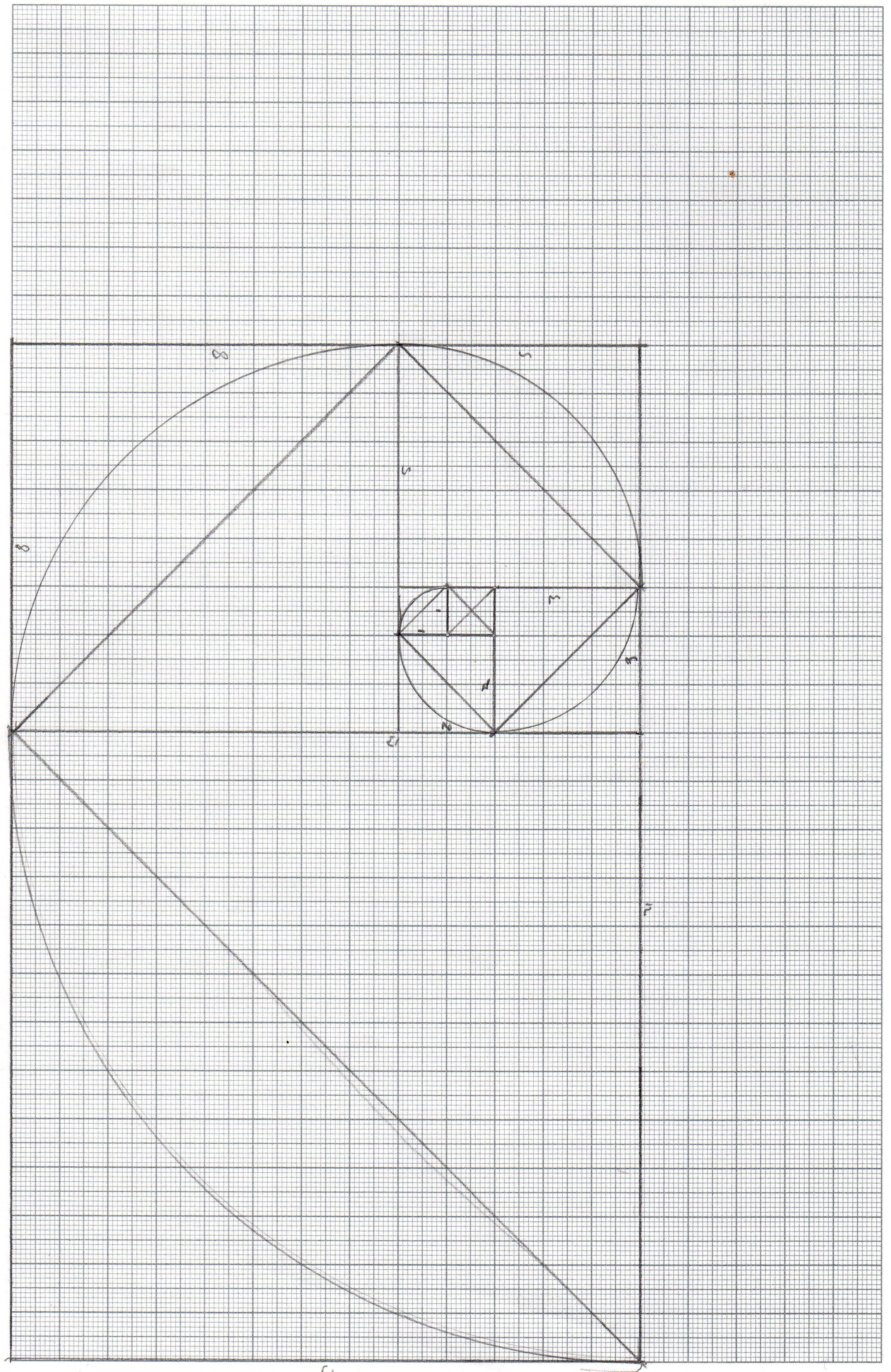 a line drawing of the fibonacci spiral on graph paper