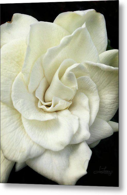 White Knight Metal Print By Jill Love Beautiful Flowers Images Metal Prints Flower Art