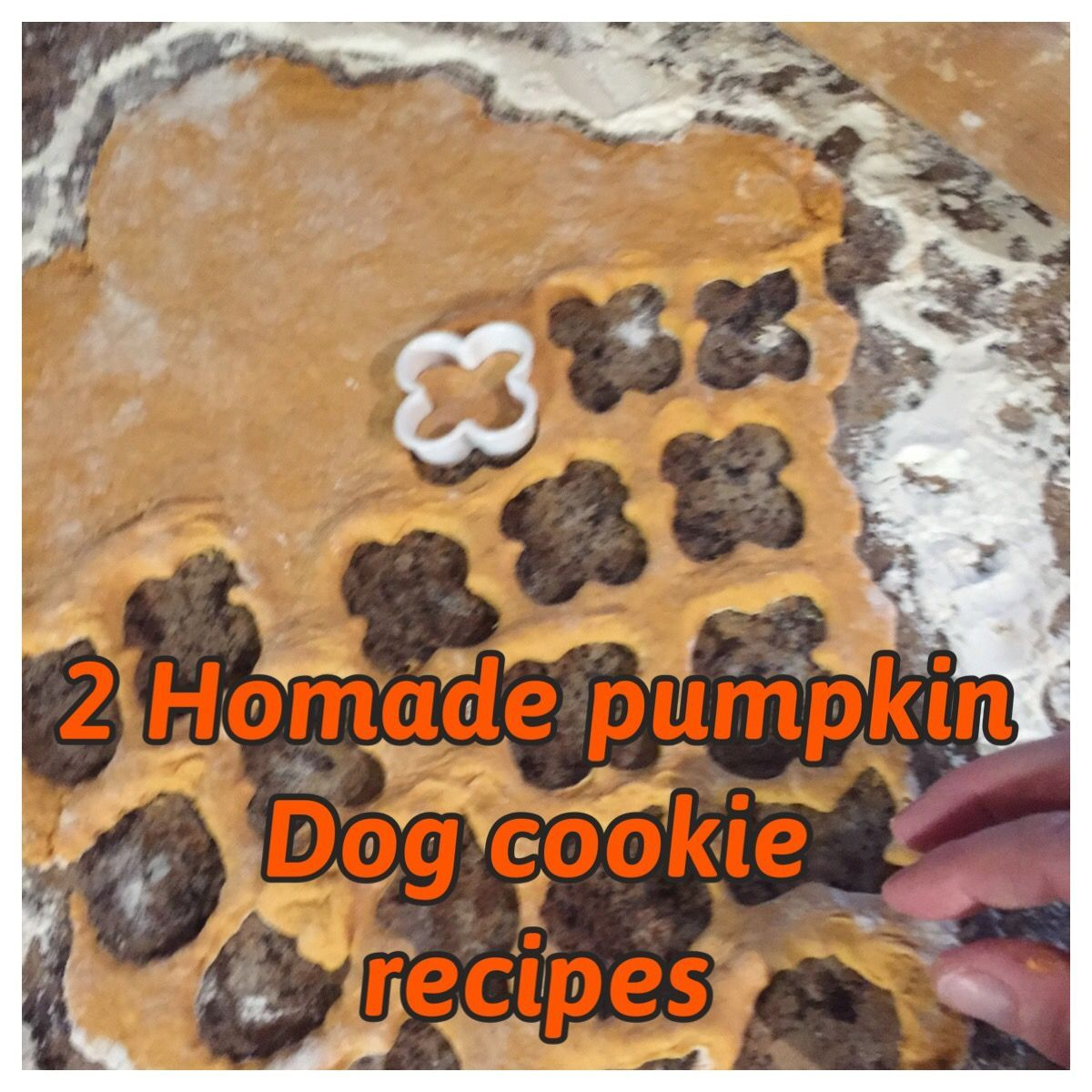 Insects  #pumpkin #treats pumpkin dog treats, dog treat recipes peanut butter, d…