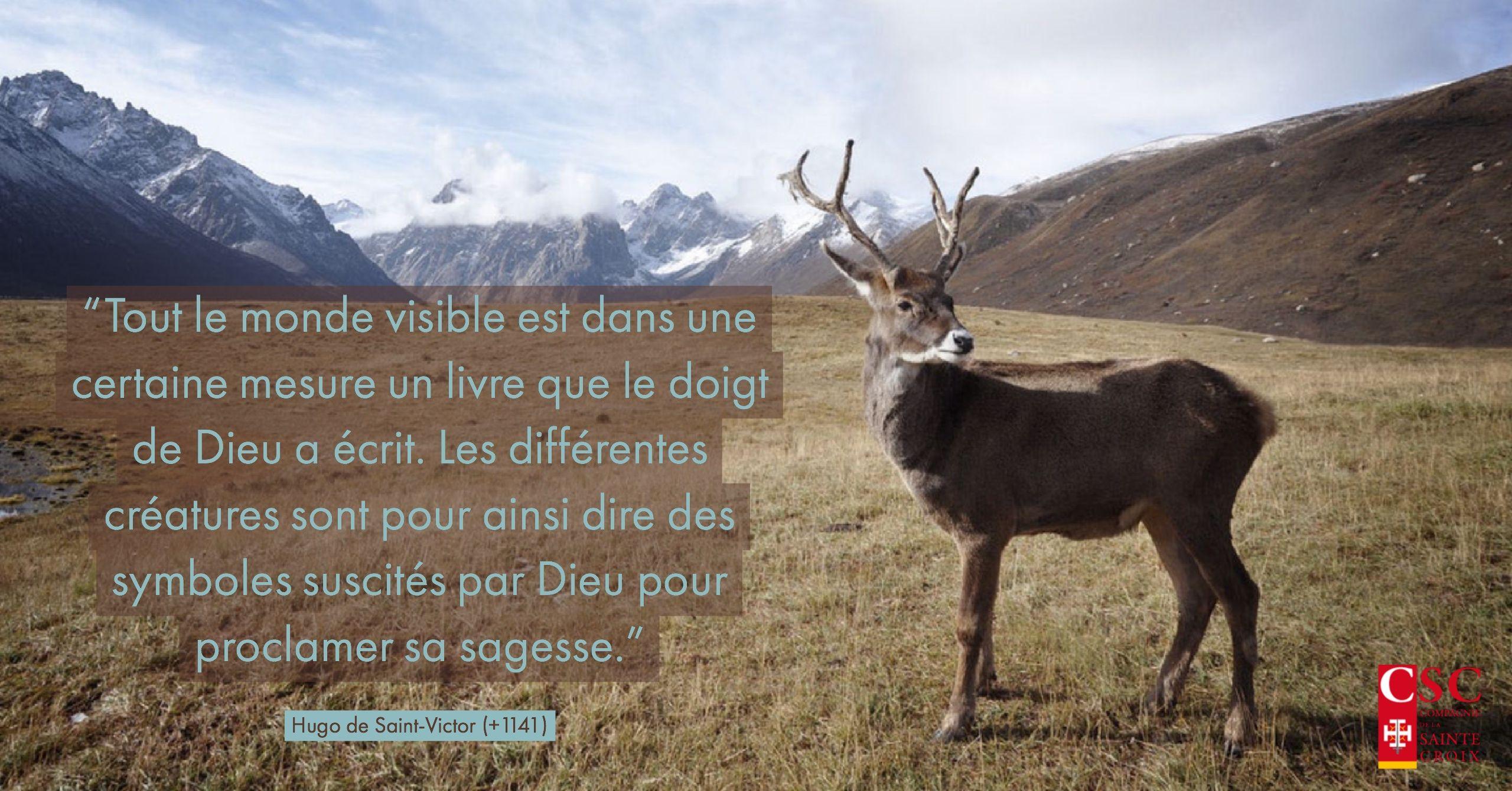 Hugo De Saint Victor Citation Dieu Nature Développement