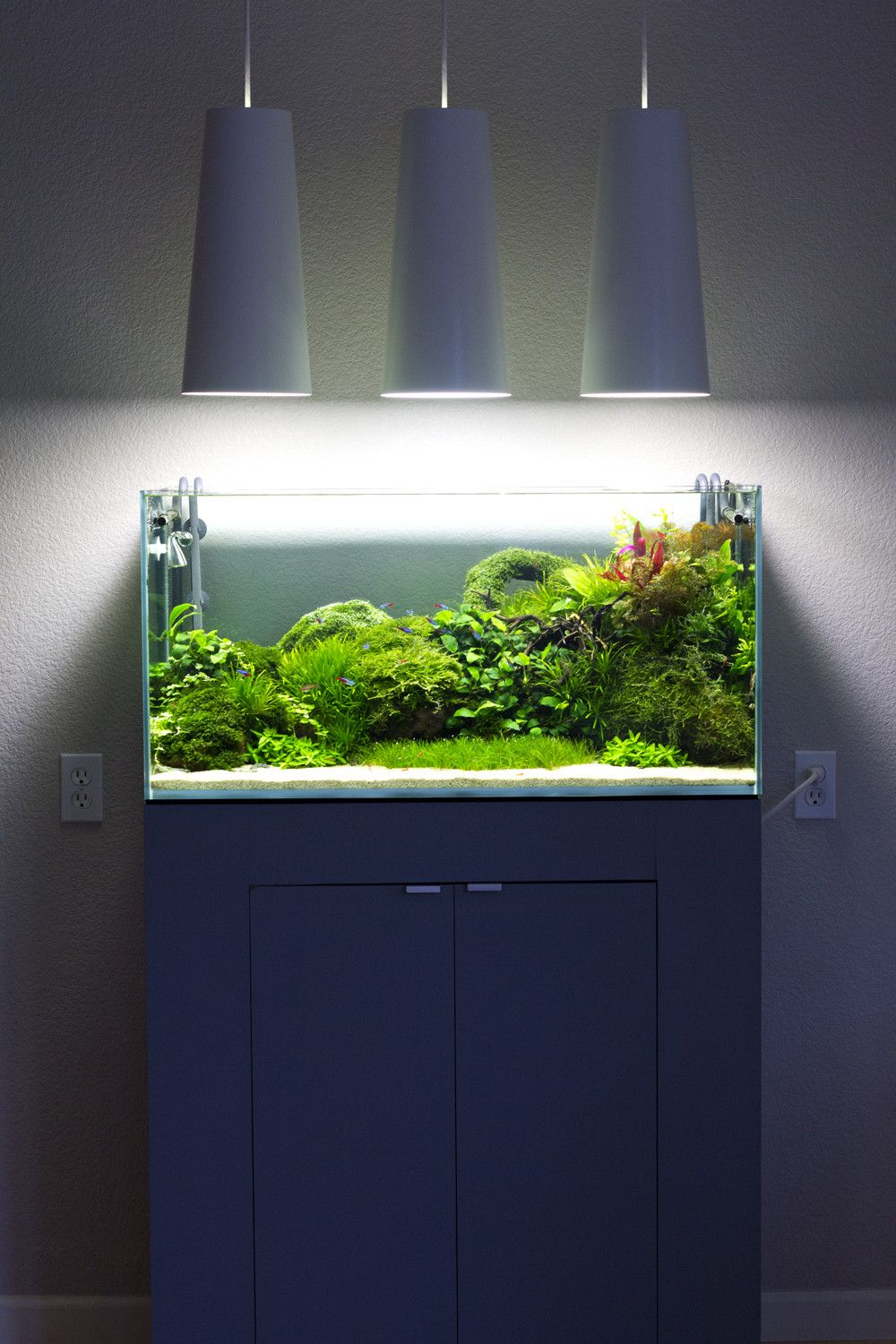 I Ve Been On This Site For A Long Time And Never Made An Account My Brother Told Me I Should Share My Aquarium What Do You Guys Think Susswasseraquarium Aquarien Und