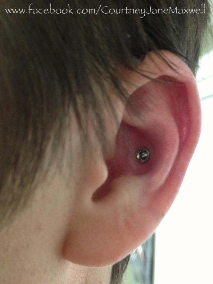 8g Conch Piercing With Implant Grade Steel Eyelet By Anatometal