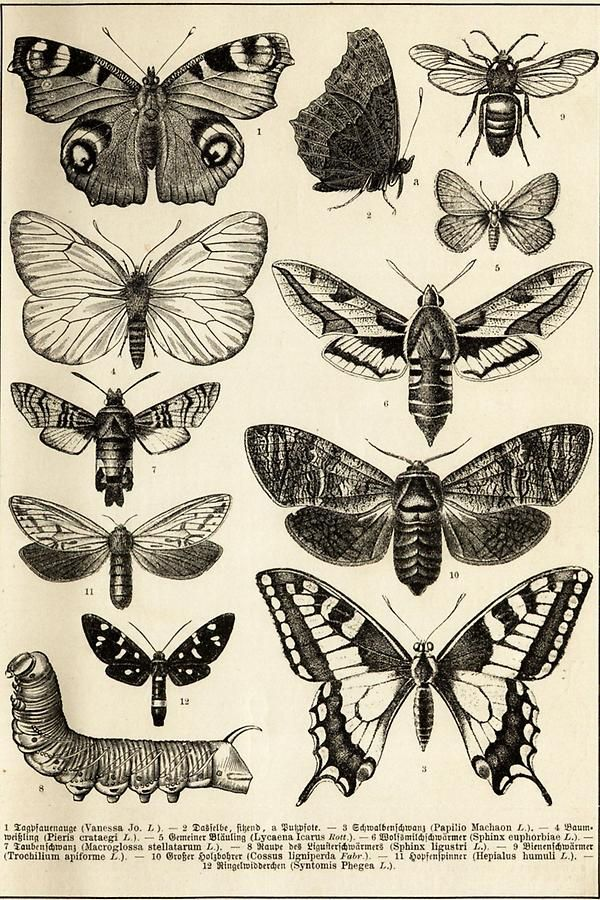 Photo of Illustration Schmetterlinge (Tafel I)