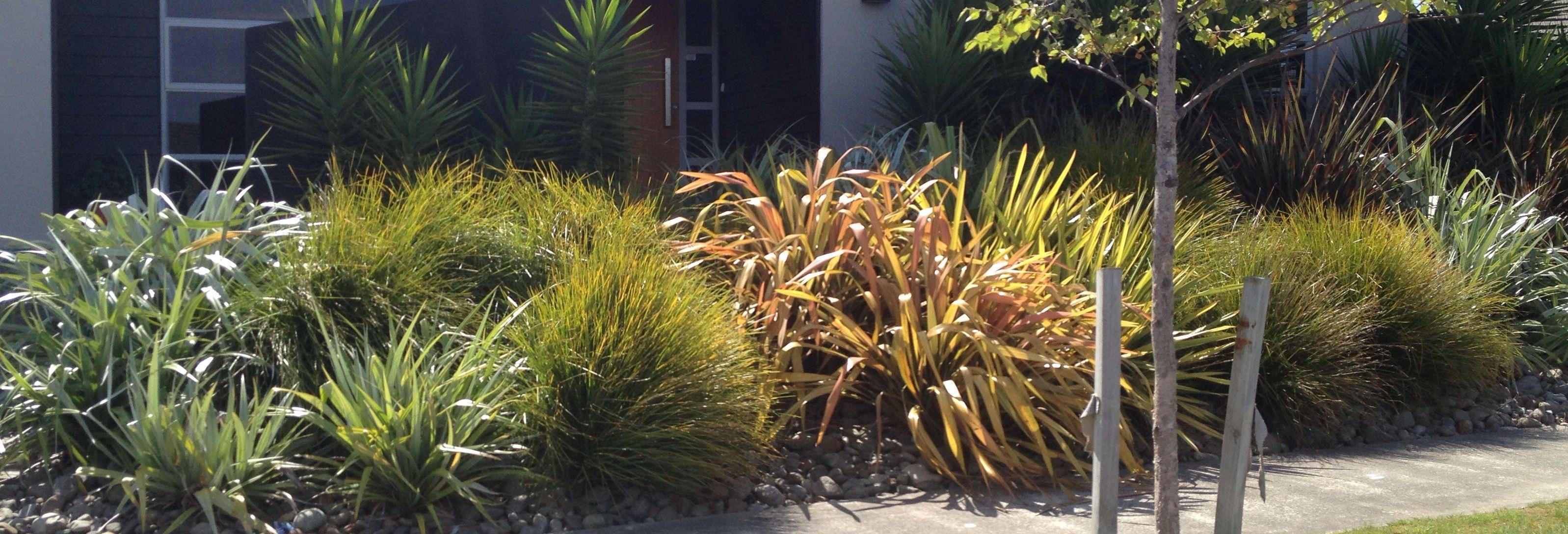 Native Nz frontage garden | Garden landscape design ...