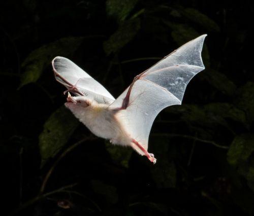 20+ Rare Albino Animals You Probably Have Never Seen Before #albinoanimals