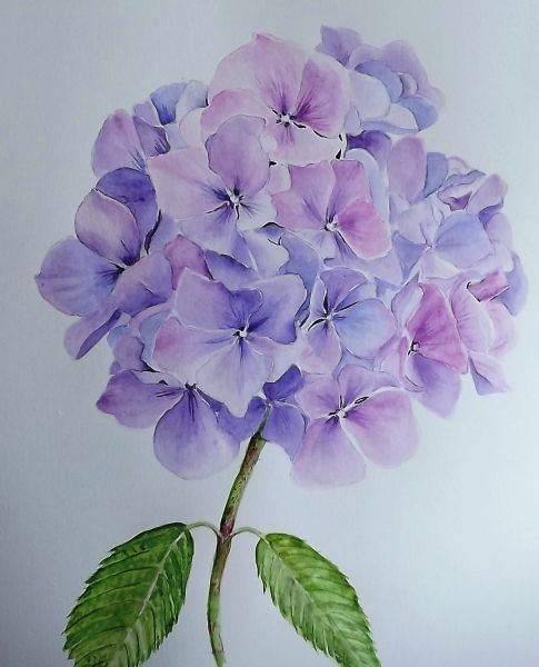 2 Glennis Weston Blue Hydrangea Watercolor Floral Art Mother Daughter Tattoos Pinterest We Heart It Floral Watercolor Flower Painting Floral Art