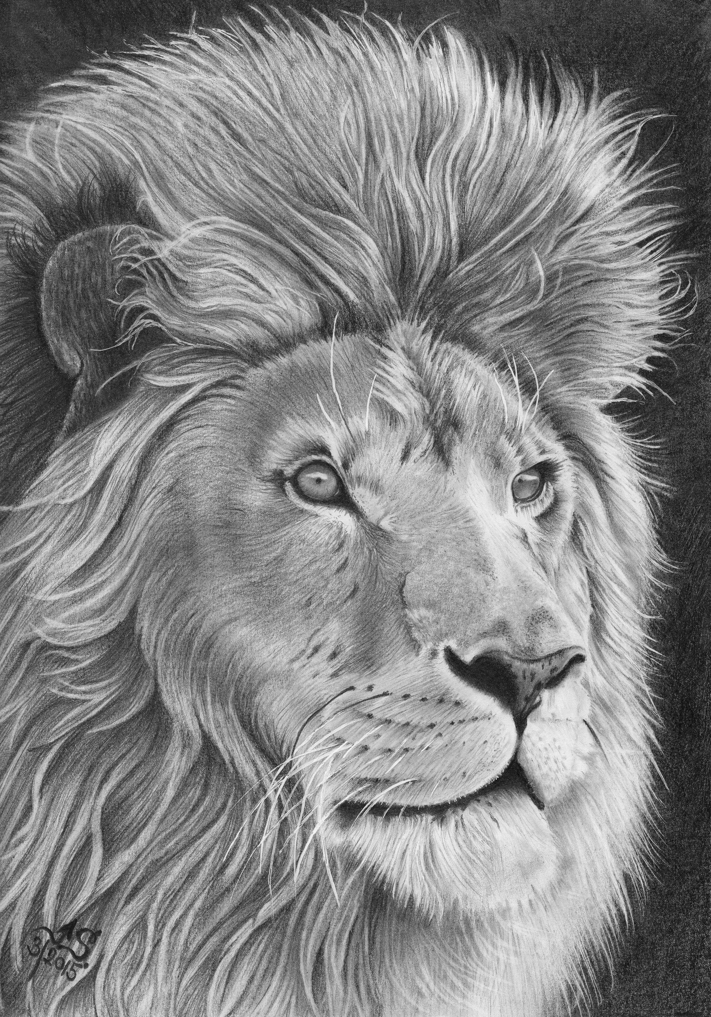 Portret Lev Kresba Tuzkou Na A4 Lion King Kresba My Pencil