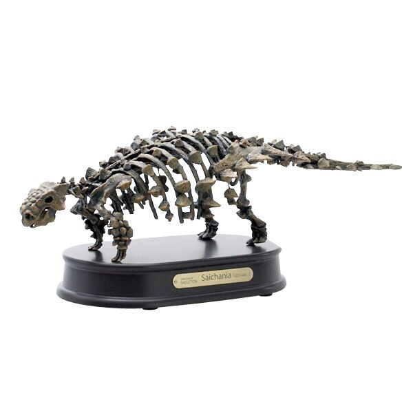 Saichania 1 20 Scale Skeleton Model Favorite Collection Skeleton Model Dinosaur Skeleton Dinosaur