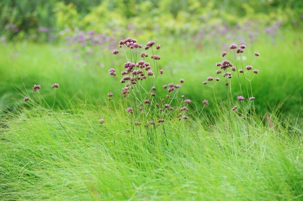 Prairieborders lianne39s siergrassen garden t garden