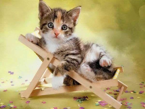 pin von barbara rathmanner auf bezaubernde katzen babys. Black Bedroom Furniture Sets. Home Design Ideas