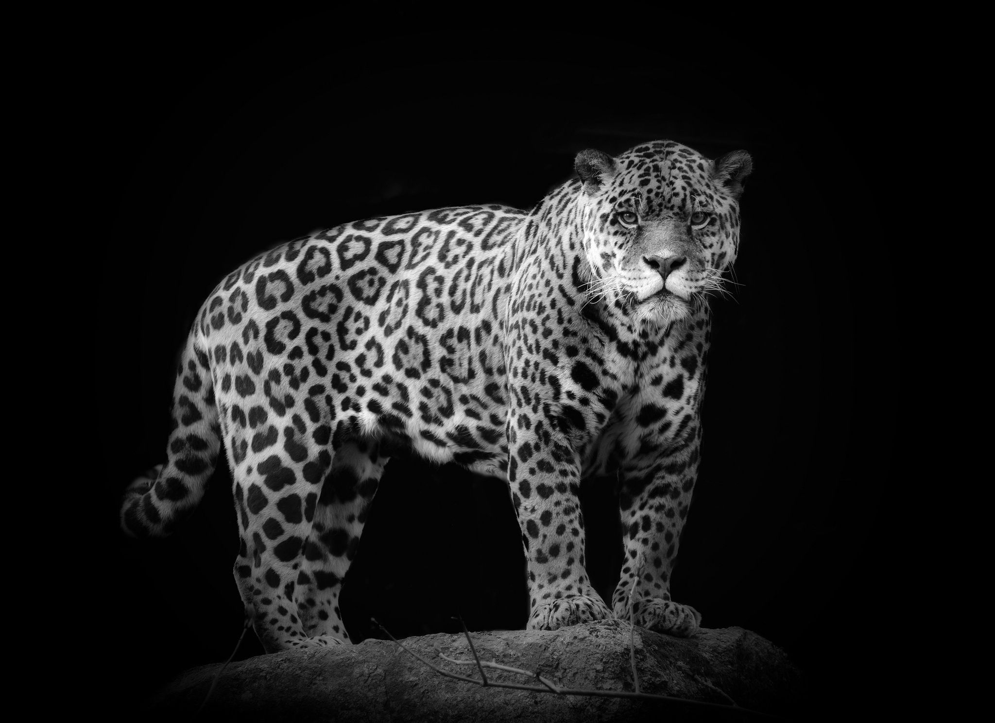 13+ Black and white animal pictures ideas