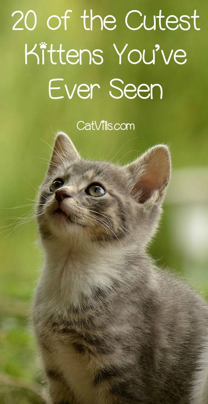 20 of the Cutest Kittens You've Ever Seen Girl cat names