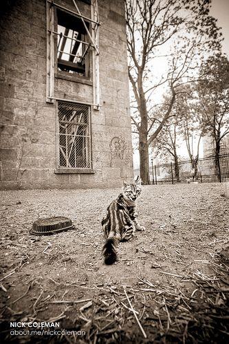 BRUCE LEE A1111384 Saving cat, Animal help, New york