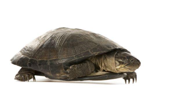 Online Pet Turtle Shop In India