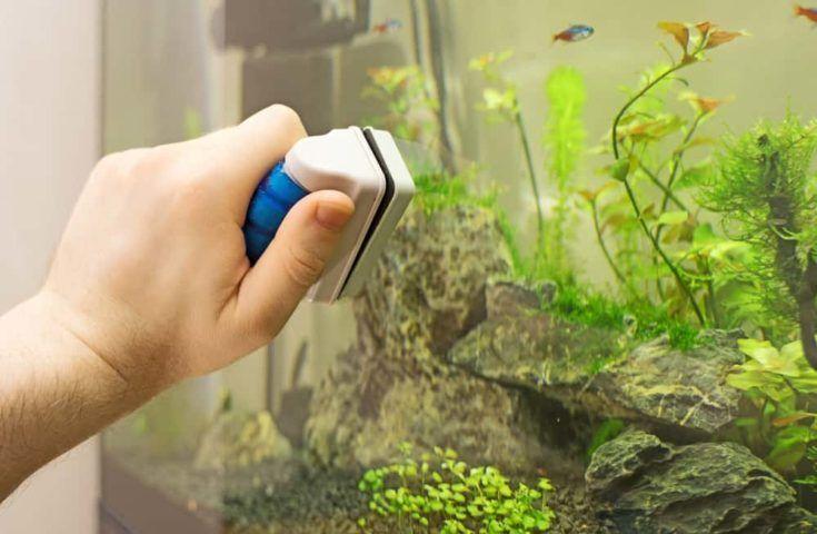 Pin On Aquarium Cleaning Maintenance