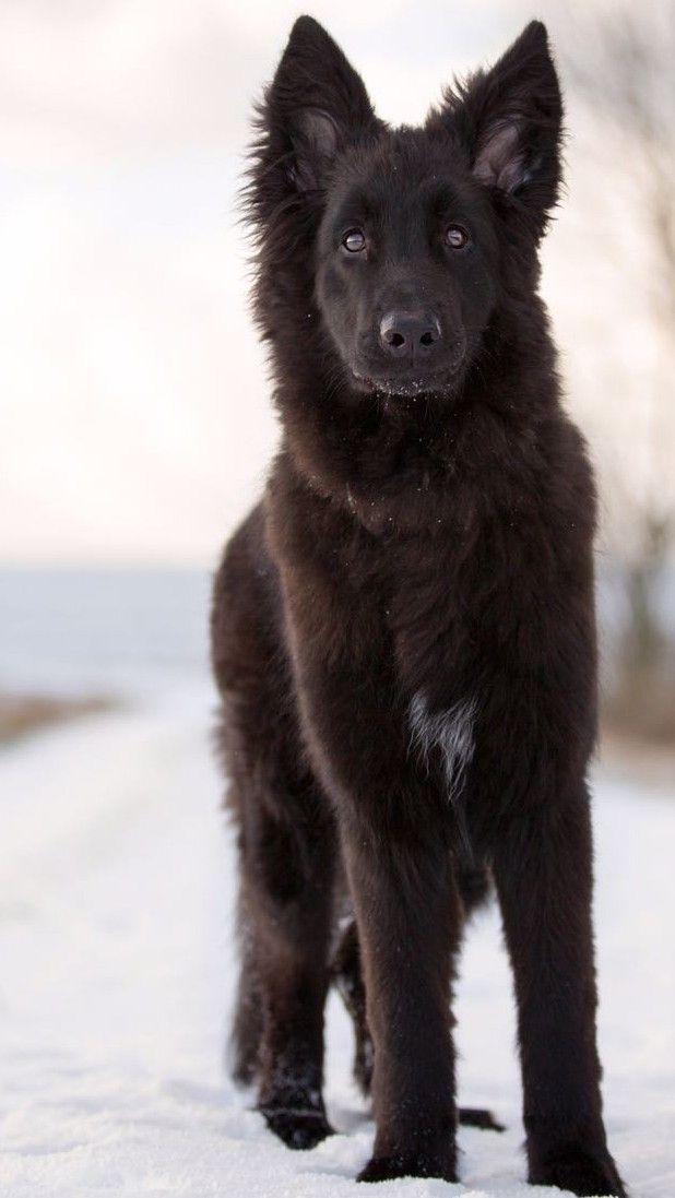 Neo Mit 6 Monaten Dogs Pretty Dogs Wolf Dog