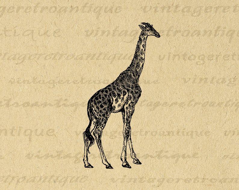 Giraffe Printable Graphic Image Animal Artwork Digital Download Illustration Vintage Clip Art For Transfers Prints Etc 300dpi No 4144 Clip Art Vintage Animals Artwork Giraffe