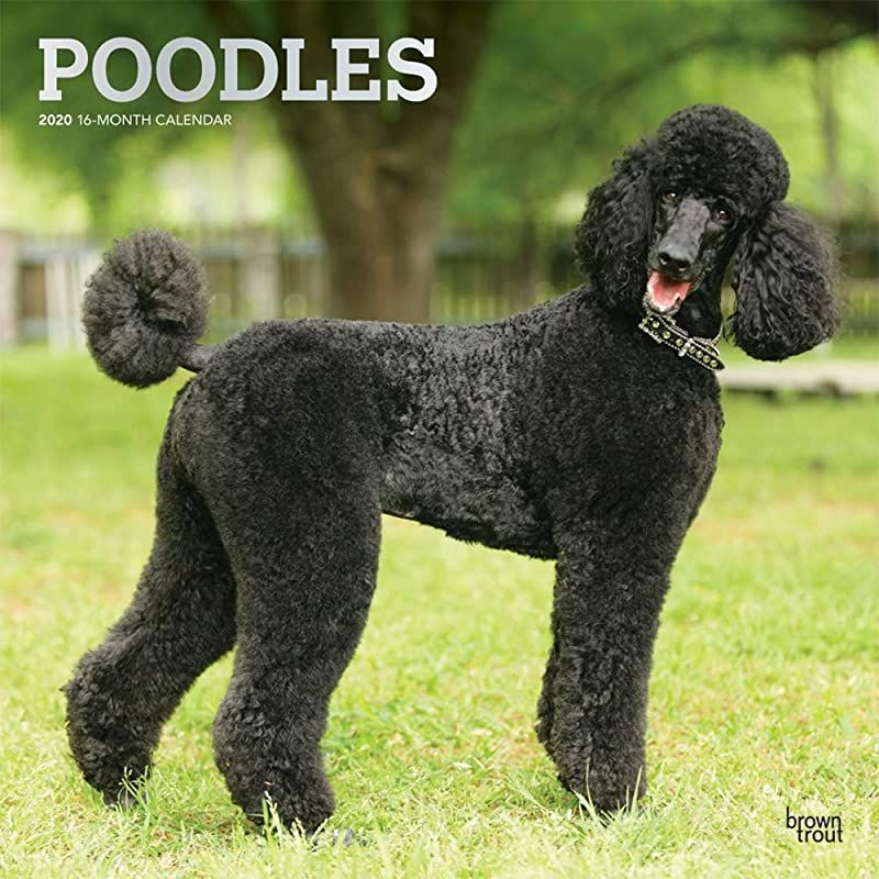 Pdf Free Poodles 2020 12 X 12 Inch Monthly Square Wall Calendar