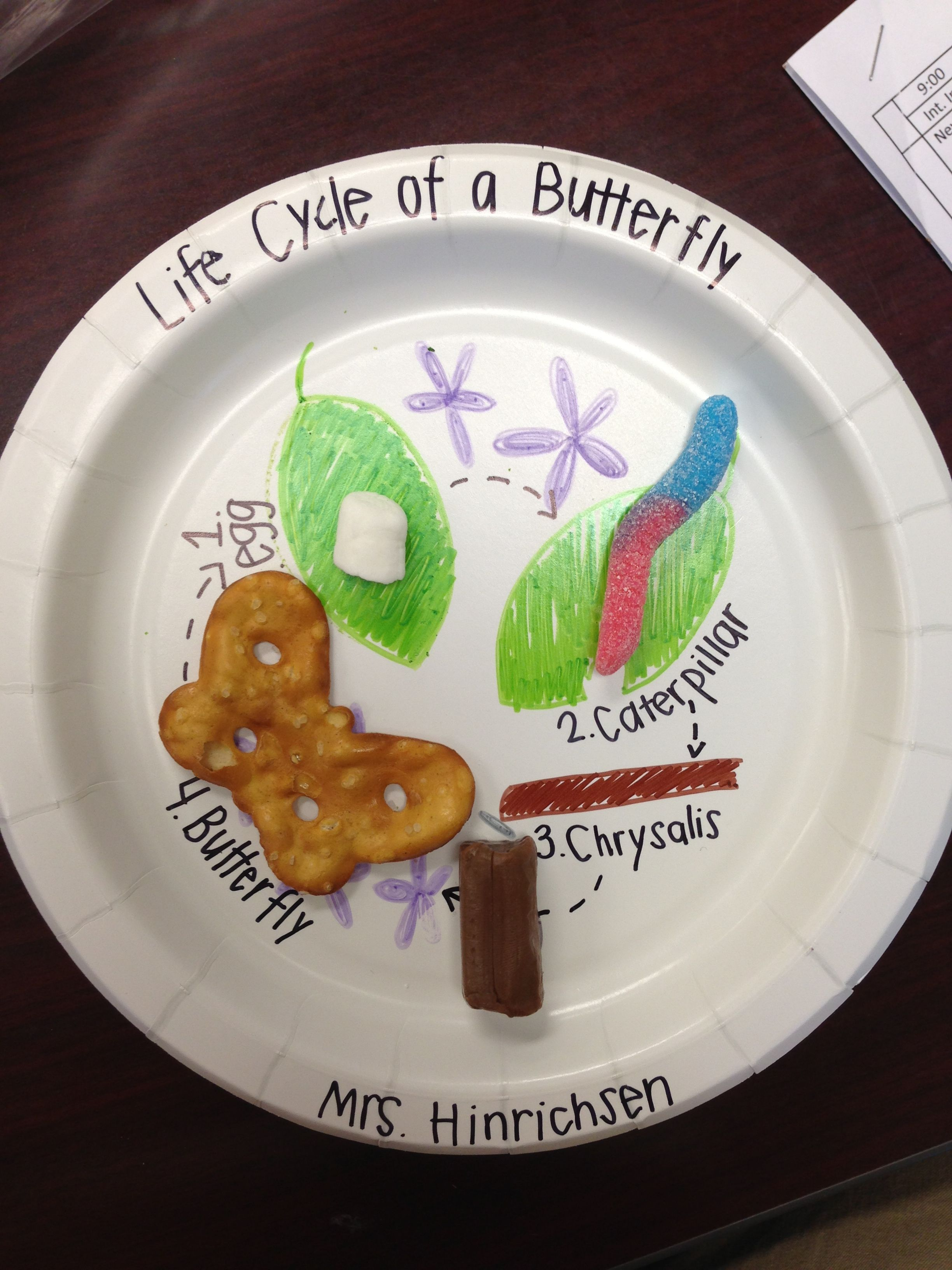 Butterfly Life Cycle Craft With Food