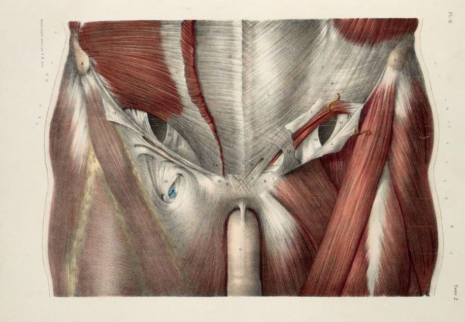 The real anatomie of technology Anatomy Inspiration and