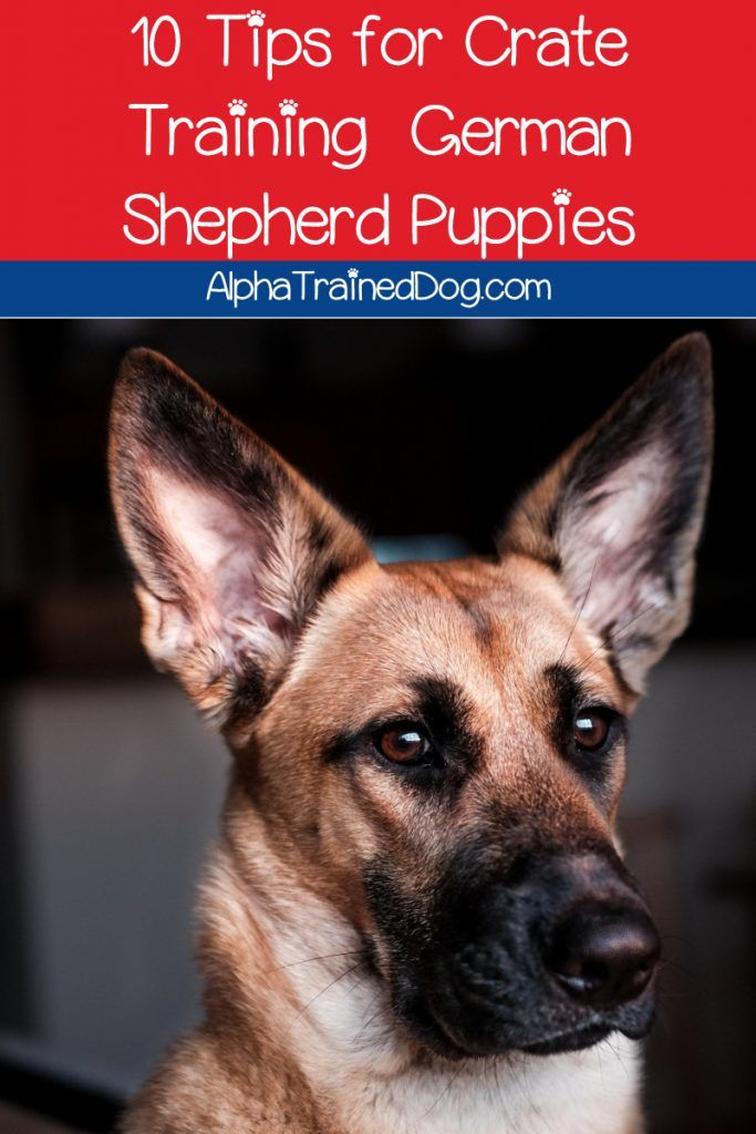 How To Crate Train A German Shepherd Puppy Alpha Trained Dog