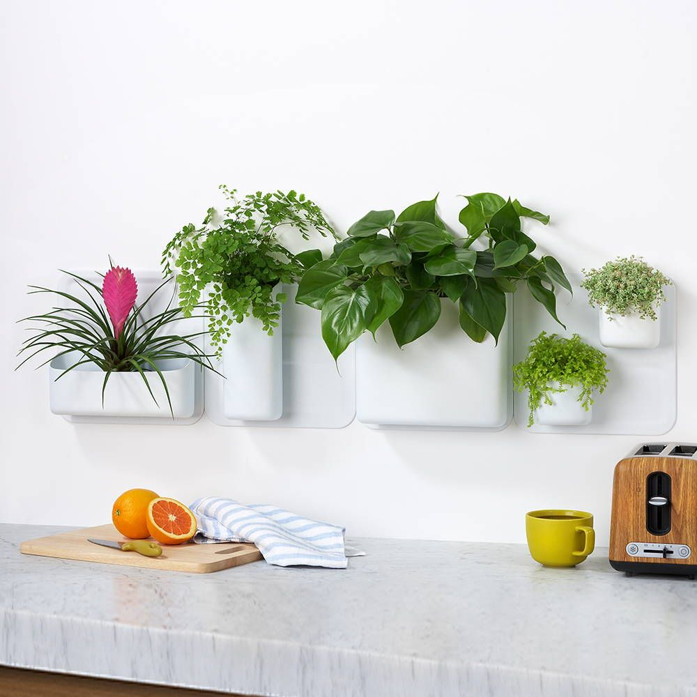 Indoor Planters, Plates On Wall