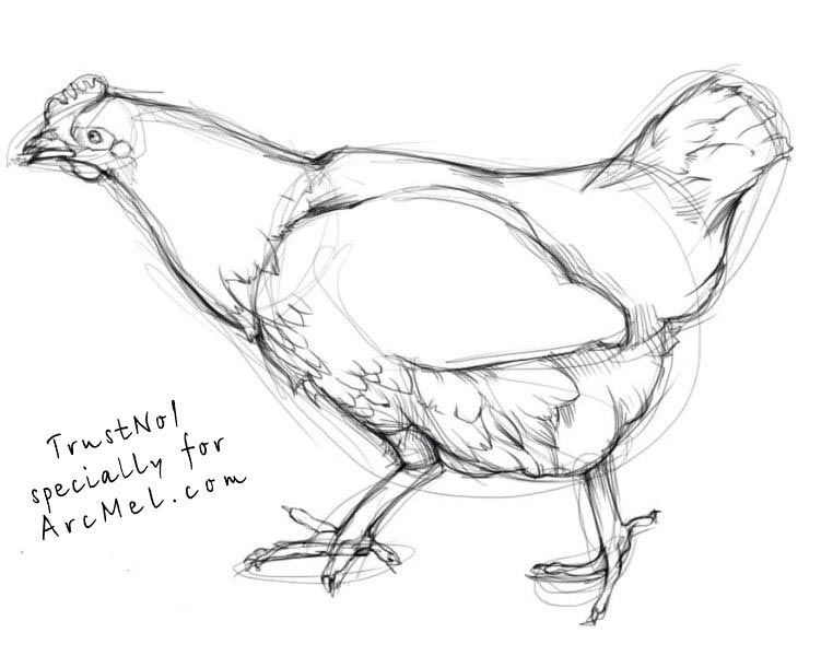 how to draw a hen step 4