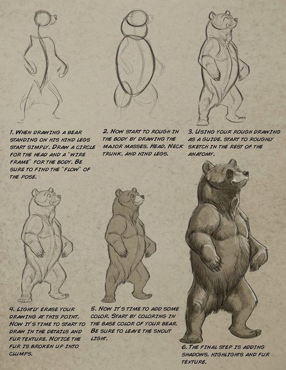 "anatoref: "" Bear by Aaron Blaise "" | Anatomie pro kresbu | Pinterest ..."