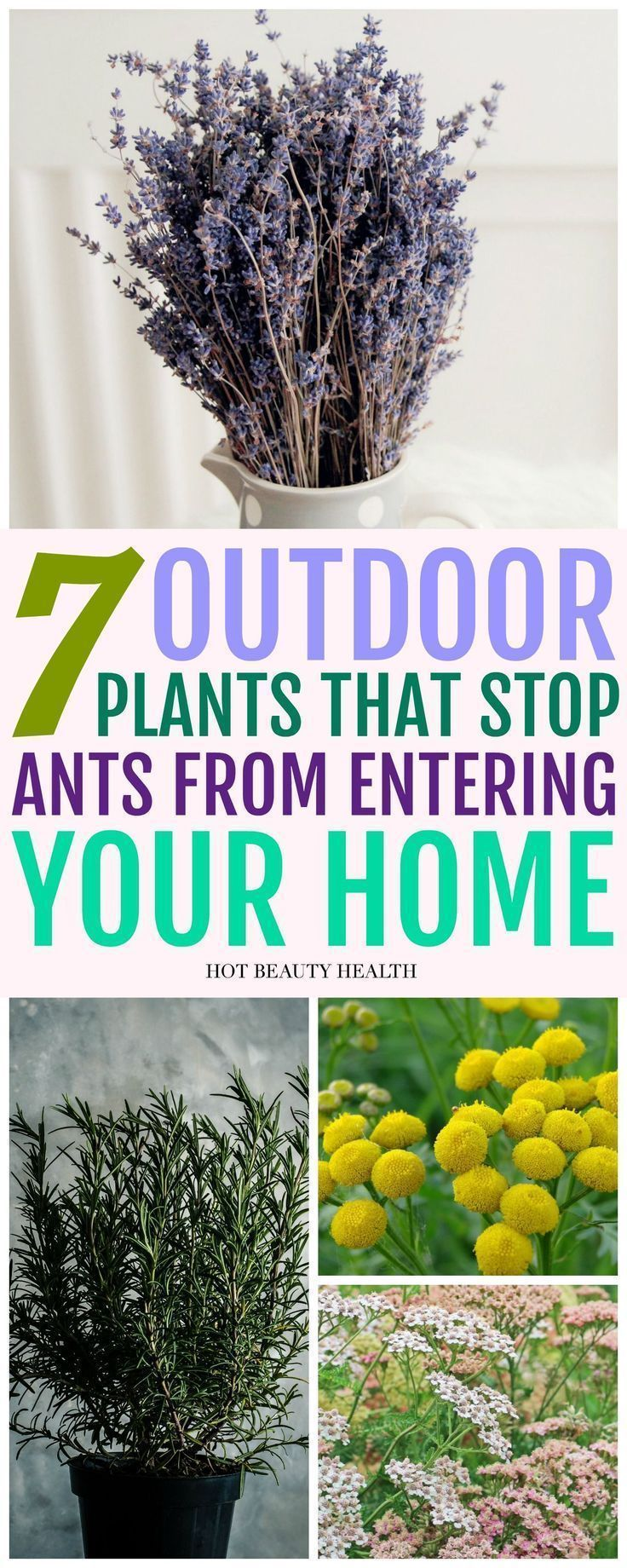 7 Ant Repellent Plants You Need Outside Your Home is part of Plants, Outdoor plants, Ant repellent, Outside plants, Plant hacks, Garden pests - Ant repellent plants provide a safe and effective alternative to many of the toxic remedies available  Below are seven of the best known ant repellent plants, as well as some of there additional benefits and uses