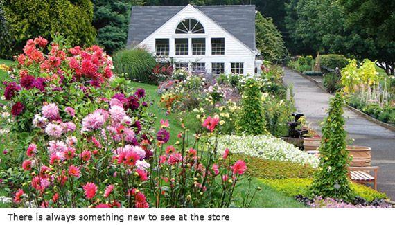 White flower farm morris ct the premier american source for white flower farm morris ct the premier american source for plants shrubs mightylinksfo