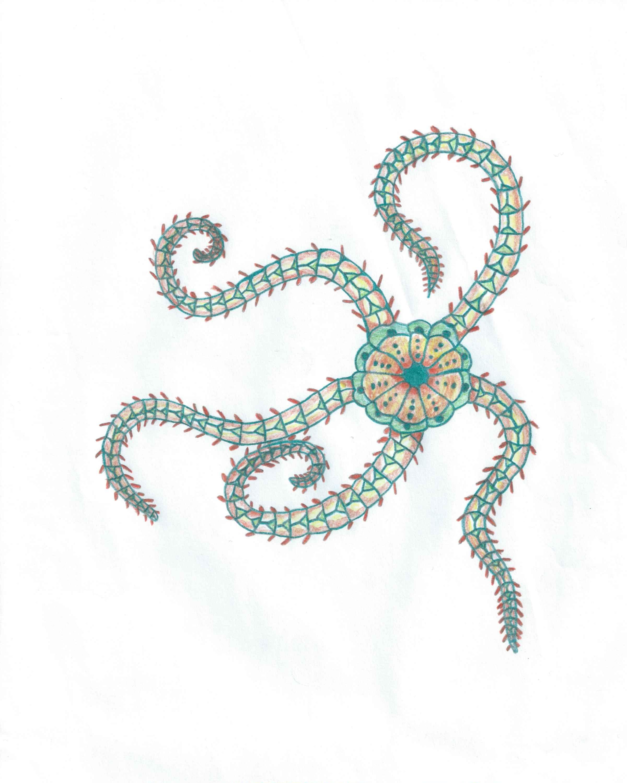 Brittle Star   sea life   Pinterest   Brittle star and Tattoo
