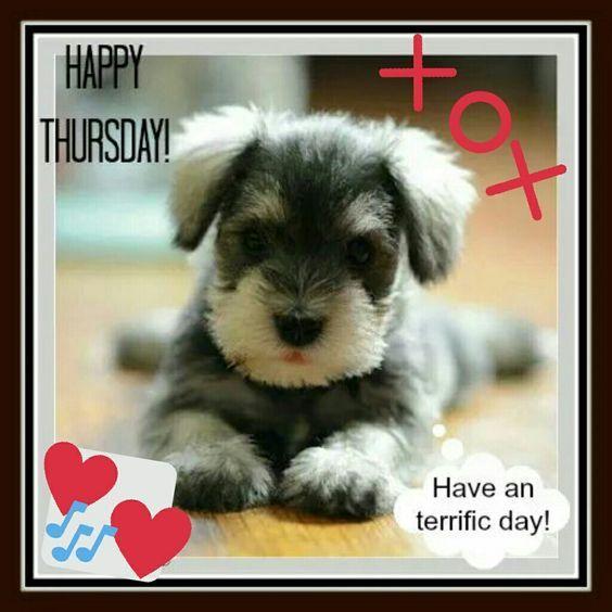 Thursday Days Thursday Cute Baby Animals Cute