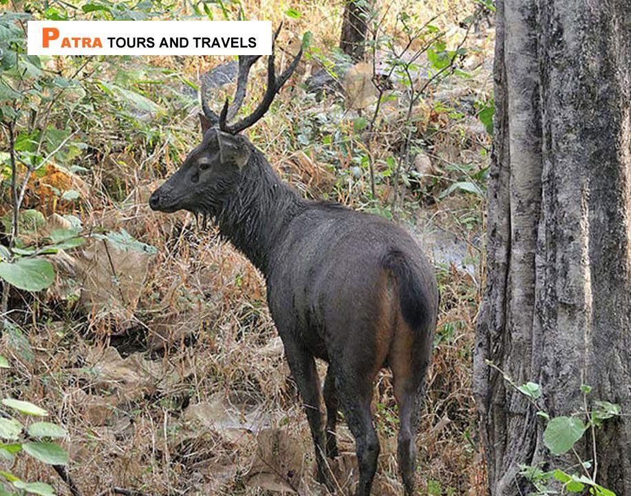 Balukhand Konark Wildlife Sanctuary is a wildlife
