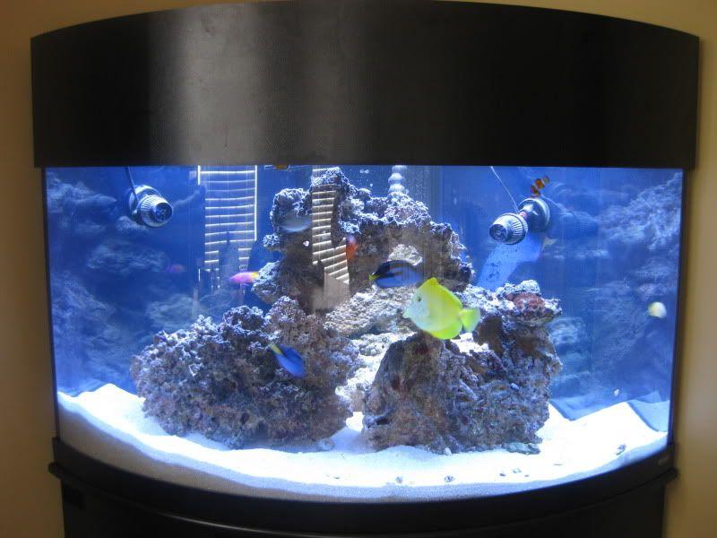 92 Gallon Reef Saltwater Aquarium Fish Tank Corner Unit Oceanic